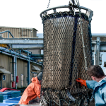 Technology can transform how people procure their fish.